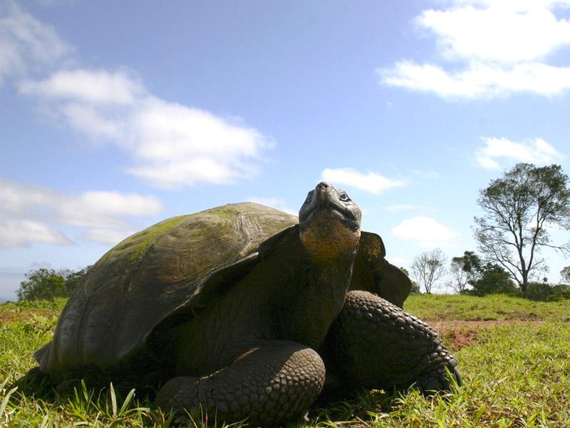 Galapagos Paradise Dreams